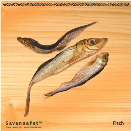 savana fisch-1
